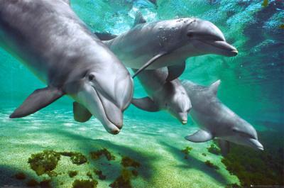 dauphins-et-marsouins.jpg